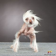 wow, thats one ugly dog.