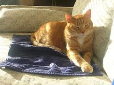 sun bathing kitty Miles (rip)