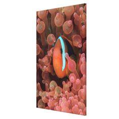 #fishing - #Clown Fish Among Anemones Canvas Print