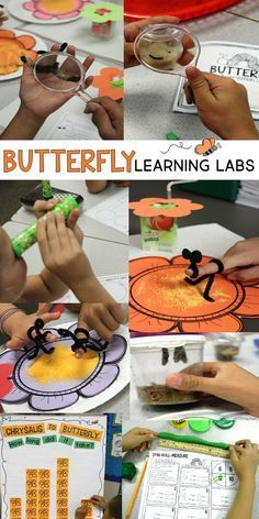 This teacher did some really cool science experiments while learning about butterflies. They did activities that explored the butterfly compound eye, pollination, and the stages of life cycle. They even integrated math and literacy centers. This is a must read if you're raising butterflies in your classroom! Plus you can download a free life cycle bulletin board set and butterfly math pages in the post.