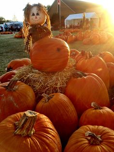 Pumpkin patchin' is always a great way to spend an evening with the family.