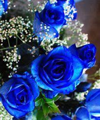 "Foto en ""Miss Rosass"" - Google Fotos"
