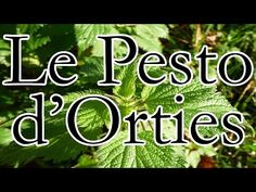 La recette du Pesto d'Orties