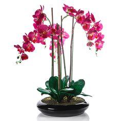 Drojdie la orhidee