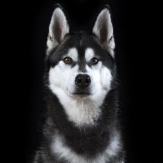 This Guy Takes Personal Portraits Of Dogs, Cats And Horses! http://www.gossipness.com/funny/this-guy-takes-personal-portraits-of-dogs-cats-and-horses-1112.html