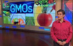 Dr. Oz viewers were left to contemplate a picture of a bin of tomatoes labeled GMO and a bin labeled non-GMO. No tomato in your grocery store is a GMO. Get more information on GMOs by clicking this photo.