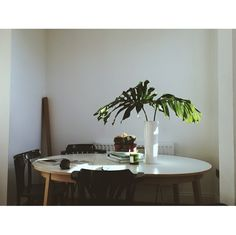 Ferns, dining table