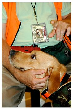 16 Best Ptsd Service Dog Trainers Images Service Dogs Ptsd Sneakers
