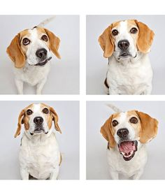 Dogs in a Photo Booth Find Their Forever Homes - Sampson is smiling big because he was ADOPTED!