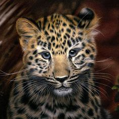 "Colored pencil drawing of Kanika, an Amur leopard who was the first born for her mother Kaia with her partner Akin at Marwell Wildlife in Britain. Kanika, whose name means 'gold' in Sanskrit, is about five months old in this drawing (reference photo taken by Chris Godfrey in October 2014). This summer she was moved to Santa Barbara Zoo in California, where there is a future mate for her. (A local sponsor family has given Kanika the name ""Ajax"" for show purposes at Santa Barbara Zoo.) Amur…"