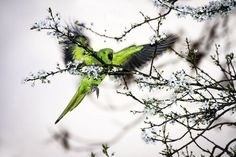 The Green Bird Photo by Drago Davidov -- National Geographic Your Shot