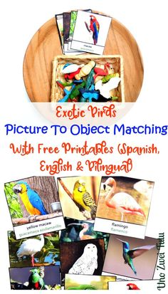 Beautiful Montessori-inspired Exotic Birds Three Part Cards For Picture To Object Matching. Free Printable In English, Spanish And Bilingual. These cards are perfect for introducing new vocabulary to toddlers or prescholers or a new language to children all ages.