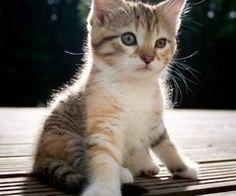 Ik kan erg blij worden van kleine dieren, zo lief en kwetsbaar. - Yvon #EOJD