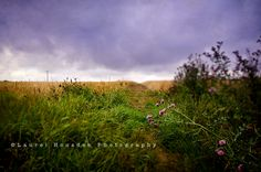 Clavering Essex England - One of my favorites from the trip   #england #uk #landscape #clavering
