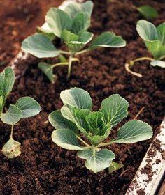 Tips for preparing soil for plants