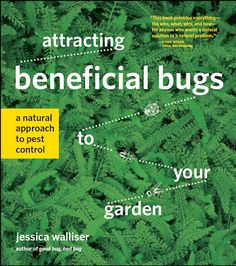 How to attract Beneficial Bugs to your garden -- from the Cold Climate Gardening Blog