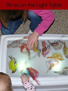 Birds on the Light Table | Child Central Station, #ece, #kids, #birds printed translucent birds for playing on our light table. The children have been LOVING playing with them!