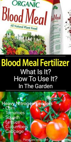 Dried blood meal fertilizer affordable, nourishing, organic garden soil amendment. Add nitrogen to compost, an all-natural nitrogen fertilizer source.