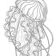 box jellyfish coloring pages | Box Jellyfish Coloring page | Coloring pages, Jellyfish ...