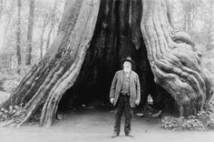 """Charles (Dad) Quick, Centenarian, """"Hollow Tree"""", Stanley Park 1928"""
