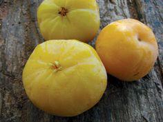 A cagaita é uma fruta nativa brasileira, presente em todo o bioma Cerrado, na região centro-oeste do Brasil.