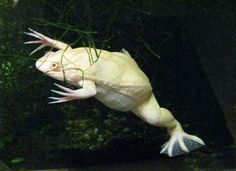 Les animaux albinos
