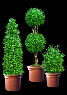 #artificalhedges and #topiaries