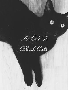 #blackcats #october #halloween #blogpost #lifestyle