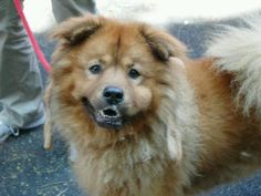 Manhattan NY.  Bear.  Male.  3 yrs.  Dies in a.m.  See Urgent Part 2 on fb.***RESCUED***