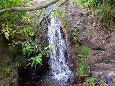 #Spain #Canarias #GranCanaria Cascada tras las ramas