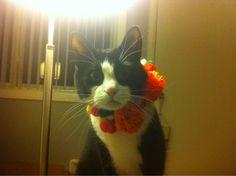 Cat necklace.  http://cute-overload.tumblr.com