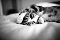 kitten love...