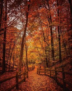 "Now, THIS is what we call a ""red carpet entrance"" Autumn Aesthetic, Autumn Scenery, Fall Wallpaper, Autumn Cozy, Fall Pictures, Beautiful Landscapes, Wonders Of The World, Beautiful Pictures, Red Carpet"