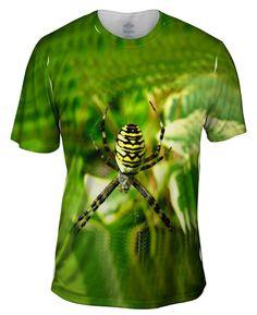 Wasp Spider At Rest