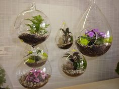 teapot terrirum | Hanging terrariums | Yelp