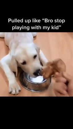 Funny Animal Jokes, Funny Animal Pictures, Animal Memes, Animal Humor, Cute Funny Dogs, Cute Funny Animals, Funny Pets, Silly Dogs, Funny Cats And Dogs