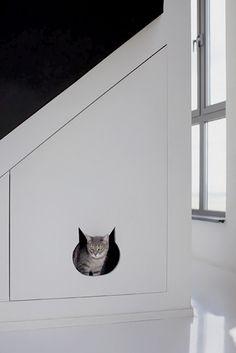 kitty-kompartment.jpeg casey tabby egyptian mau mix rescue ! Grey kitten cat