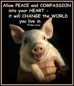 Allow peace and compassion into your heart, it will change the world you live in.