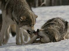 agressive vs submissive