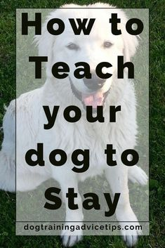 Pupy Training Treats - How to Train your dog to Stay Dog Training Tips Dog Obedience Training Dog Training Commands www. - How to train a puppy? Training Your Puppy, Dog Training Tips, Potty Training, Agility Training, Dog Agility, Crate Training, Leash Training, Training Schedule, Toilet Training