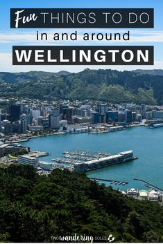 New Zealand's capital city is vastly underrated and well worth a spot on your Kiwi itinerary. Whether you have a few hours or a few days to explore, we're sharing the best things to do in Wellington that won't spoil your travel budget. New Zealand Cruises, New Zealand Travel, Capital Of New Zealand, Best Campervan, Stuff To Do, Things To Do, Wellington New Zealand, Best Campgrounds, Park Hotel