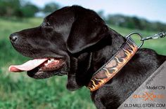 Handmade Leather Dog Collar for Labrador