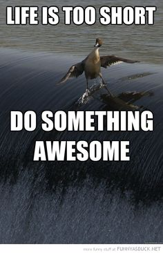 Funny Duck Bird.......