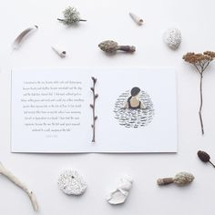 wild swimming book written by Flora Jamieson and illustrated by Gemma Koomen