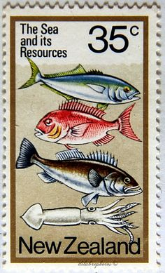 New Zealand.  THE SEA AND ITS RESOURCES. KINGFISH, SNAPPER, GROUPER and SQUID.  Scott  670 A249.  issued 1978 June 7, Litho., Perf. 13 1/2 x 14, 35. /ldb.