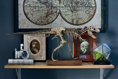 Jurassic Display Hack Under $50 - The Visualante dinosaur bones skeleton diy home decor jurassic park jurassic world trex