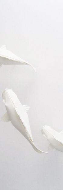 Just love koi on All White, Pure White, White Art, White Light, Snow White, Blanco White, White Aesthetic, Shades Of White, Corporate Design
