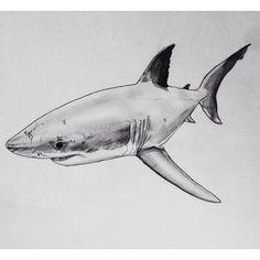 sea life - sea life photography - sea life underwater - sea life artwork - sea life watercolor sea l Shark Drawing Easy, Cool Easy Drawings, Animal Sketches, Animal Drawings, Art Sketches, Hai Tattoo, Shark Illustration, Sketch Style, Happy Shark