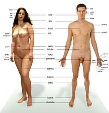 Human body anatomy - Human body anatomy is a complex thing, but interesting to learn. The human body is all that makes you up and good. Human Body Anatomy, Human Anatomy And Physiology, Human Body Facts, Animal Science, Health Articles, Risk Management, Along The Way, Reiki, Pilates