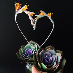 Paper succulent love #paperflowers paper flowers by http://www.thecobralily.com/